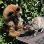 Hund vs kat