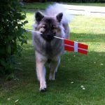 Lys hund m. flag